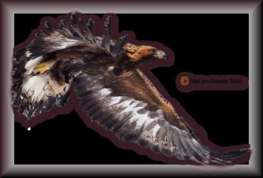 Tube d'oiseau 2974