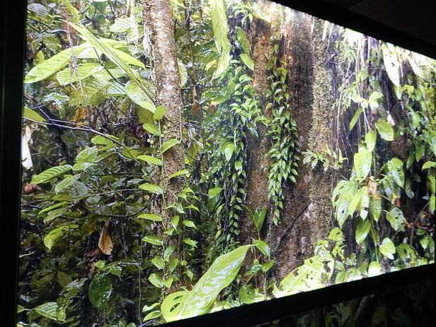 Exposition les primates musée sciences naturelles