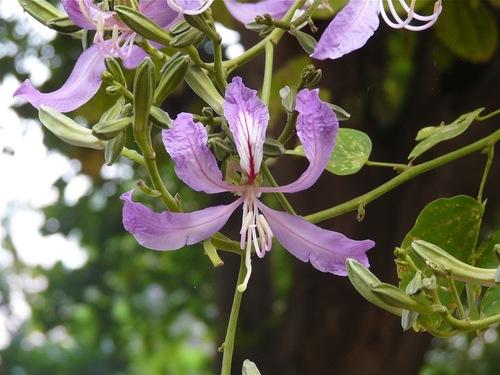 une belle orchidée sauvage