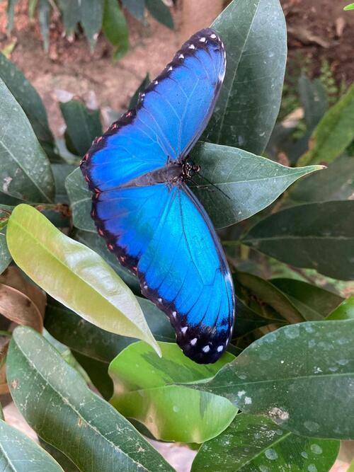 Jardins des papillons Alsace 3