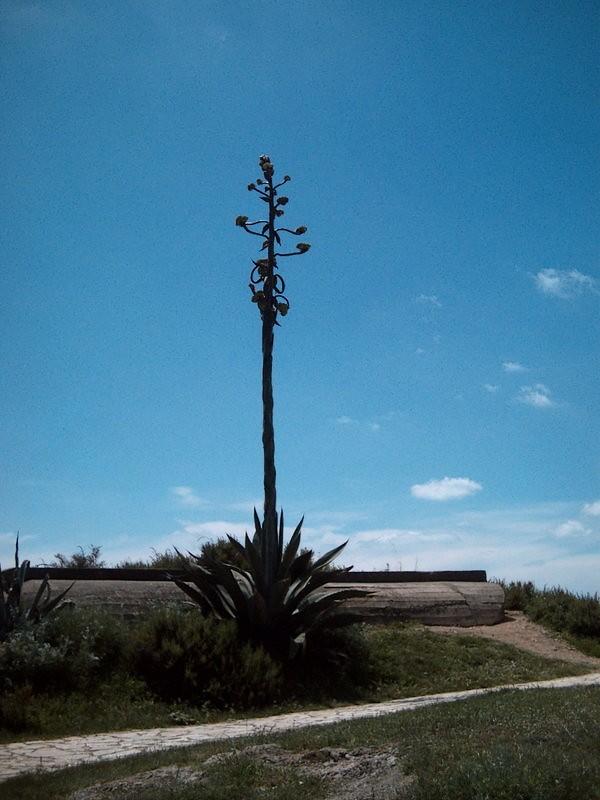 cactus-geant.jpg