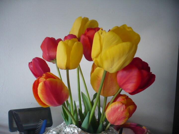 les tulipes.... à gogo