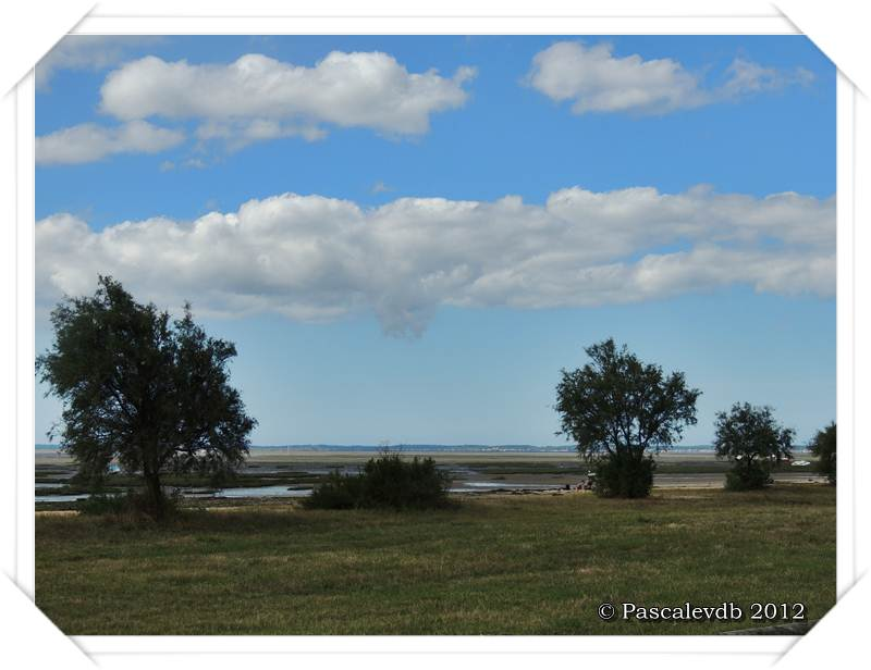 Le sentier du littoral entre Lanton et Taussat - 4/10