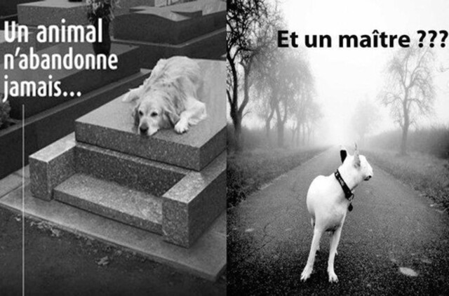 Le chien n'abandonne jamais, et le maître ???