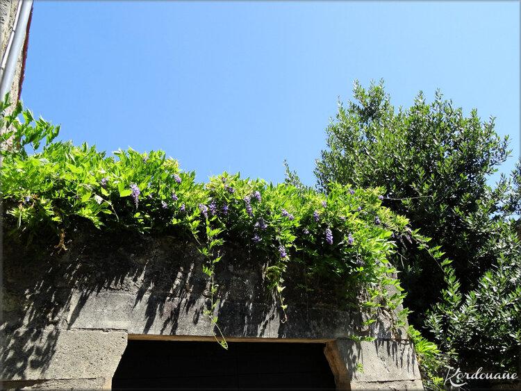 Photos des ruelles et maisons de Saint Macaire
