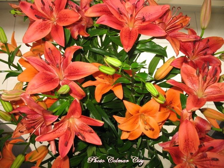 Des fleurs chez le coiffeur 32
