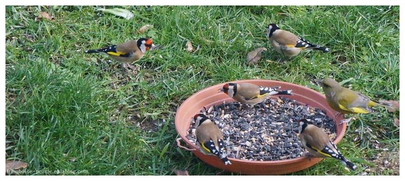les oiseaux du jardin en hiver