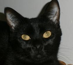 SOS un défaut de trésorerie met une association hors de soin de la part d'un cabinet vétérinaire
