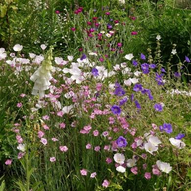 Un dimanche au pays des impressionnistes, dans le jardin de Lo...