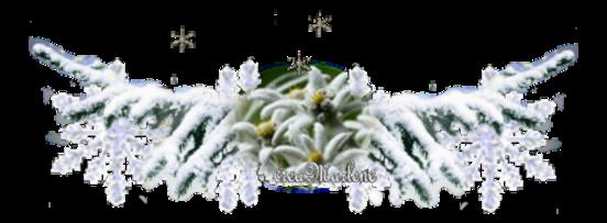 Edelweiss l'étoile des glaciers