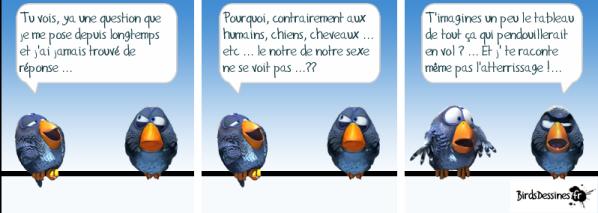 Birdsdessines-sexe.png