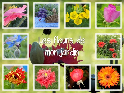 Petits montages photos