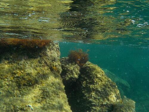 DOMANDALAS  pour Khanel jeu milieu  aquatique