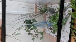 notre terrarium