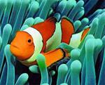 première plongée