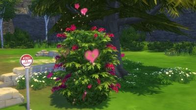 [NSBC] Le Premier Grand Amour de Fleur de Cerisier...