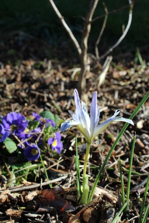 De nouvelles floraisons