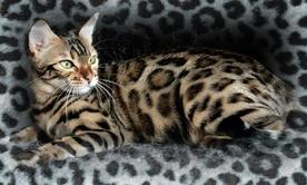 Koti8295753-bw-leopard-peau-arriere-plan-ou-la-texture-grande-resolution