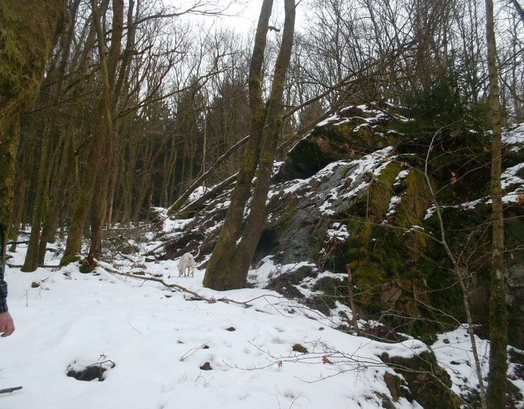 Ardennes-Pays des Rièzes