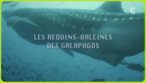 ~ Les Requins-Baleines Des Galàpagos (2012) et (2015) ~
