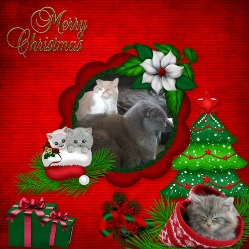 Xmas kitties