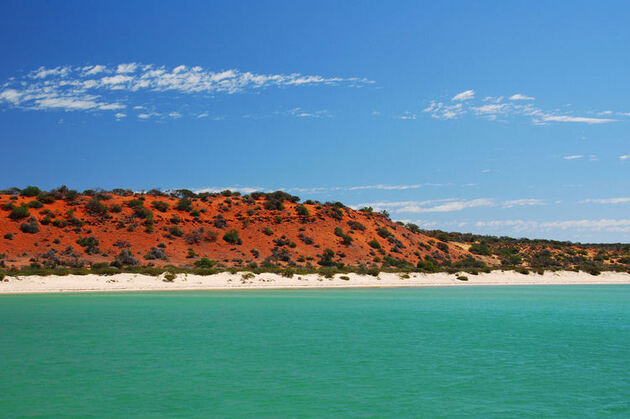 Shark Bay; Australie