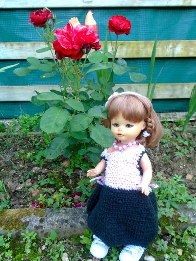 Le rosier de Rosalie