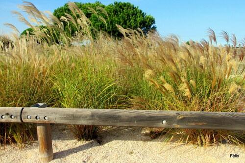 Grandes herbes décoratives