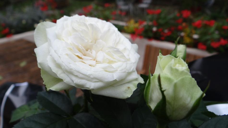 Des Feuilles .. Pour tous les Usages !! + les fleurs du vendredi