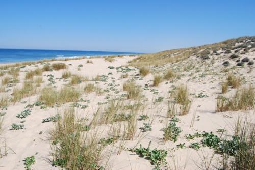 Dunes de l'aquitaine