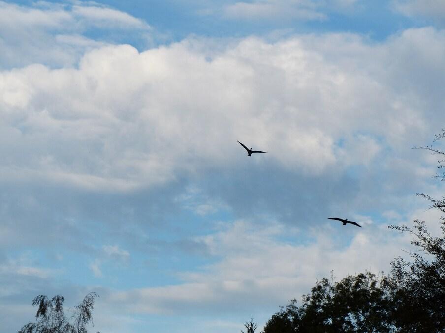 Trois cormorans