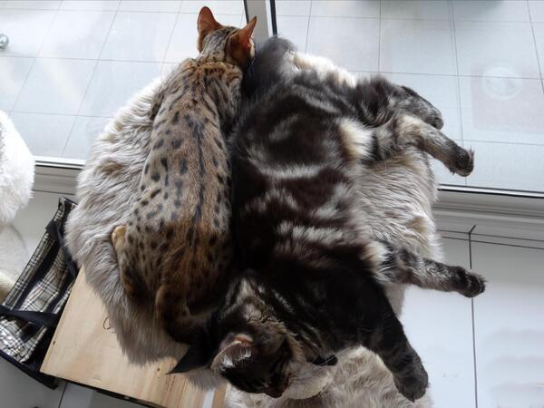 La sieste de WenGo