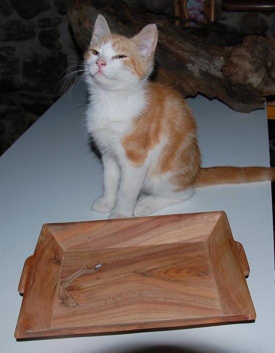 chaton20juilleto