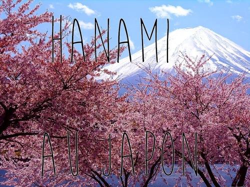 8 avril : fête des cerisiers en fleur au Japon