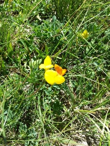 photographie de fleur