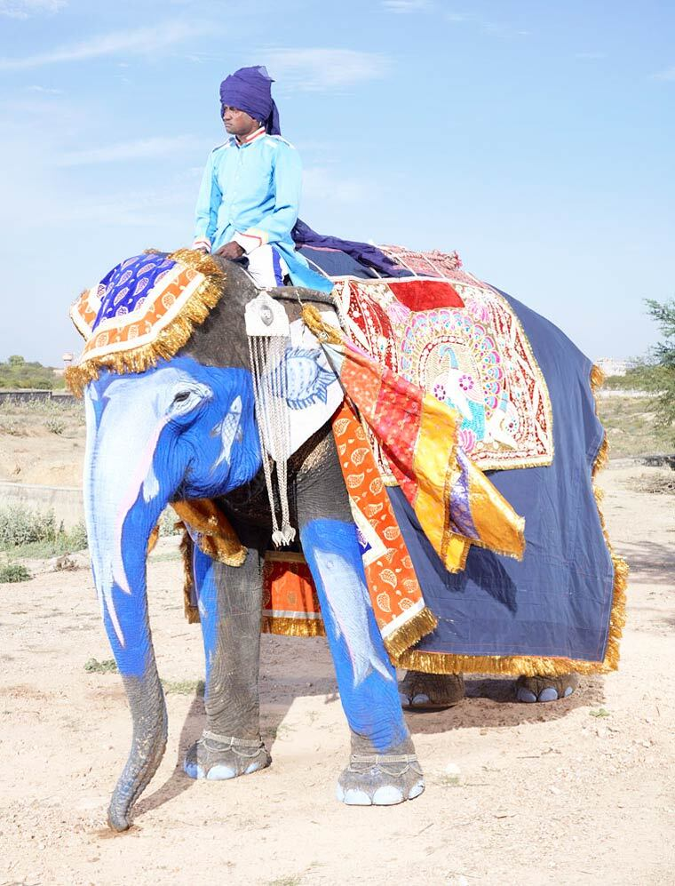 charles-freger-painted-elephants-18