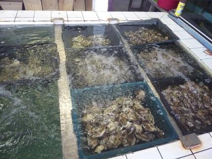 A Paziols - D'huîtres, on raffole !