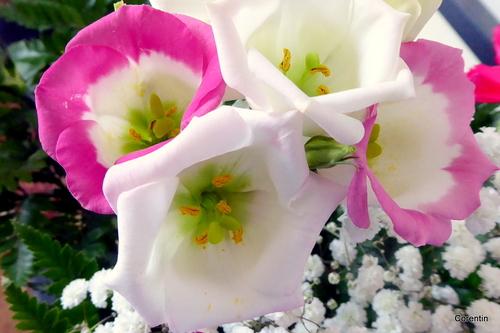 Fleurs de mon bouquet !