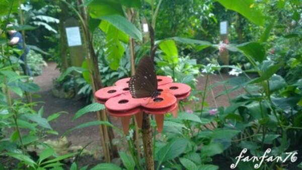Des beaux papillons