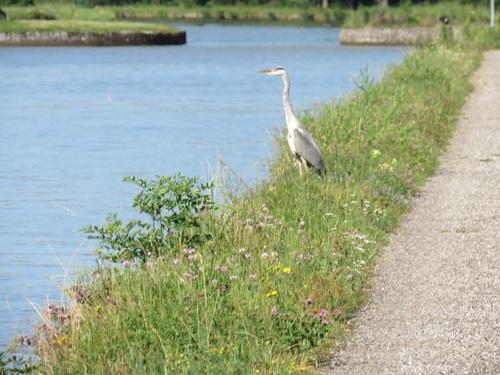 Un petit tour au bord du canal,