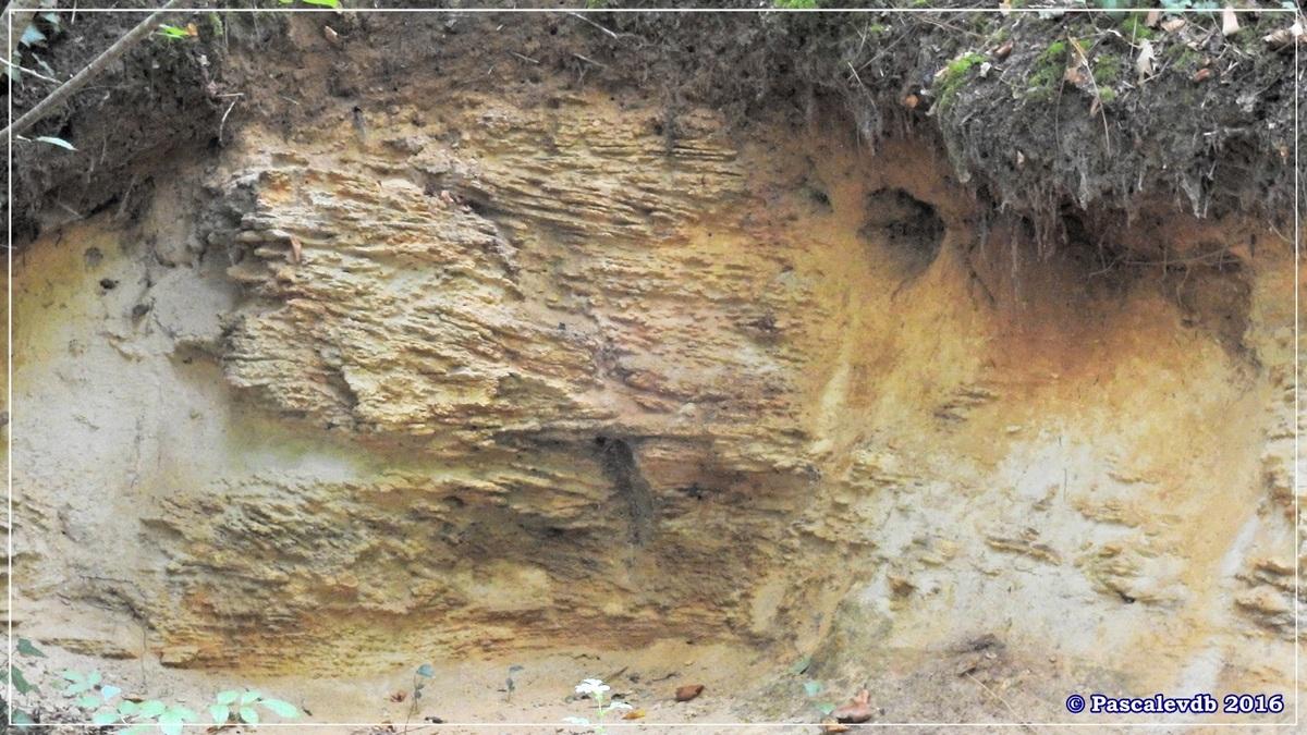 Réserve géologique de Saucats - Août 2016 - 3/10