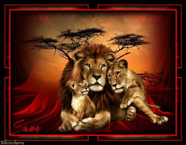 roi savane