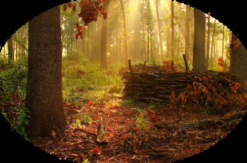 Fonds automne- hiver