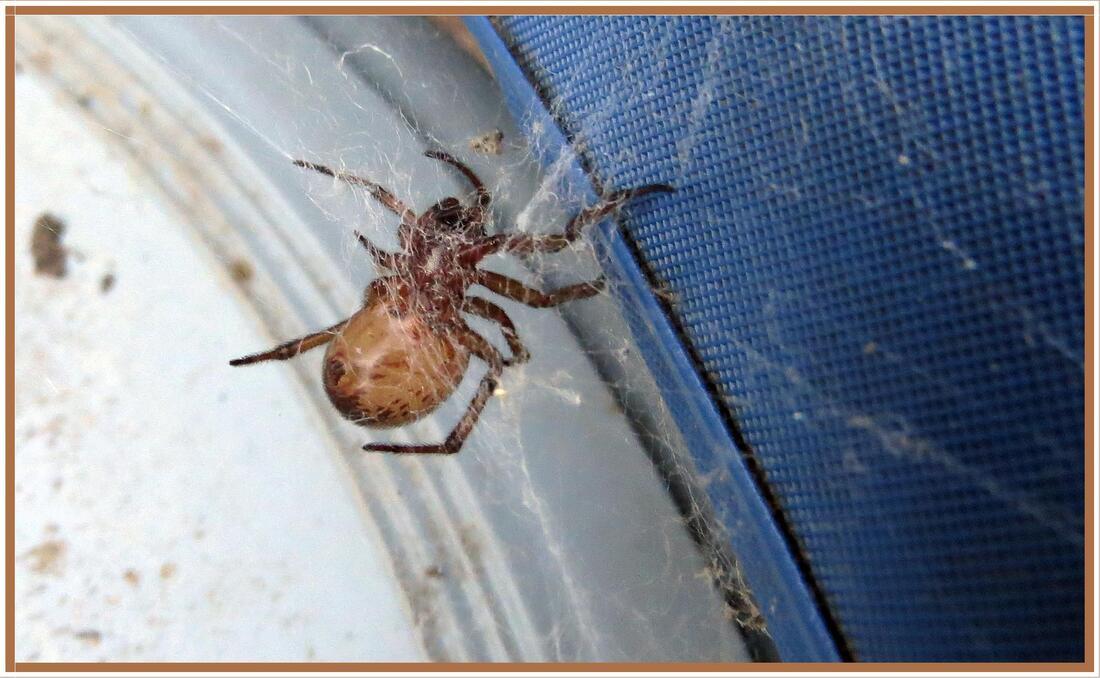 Araignée inconnue