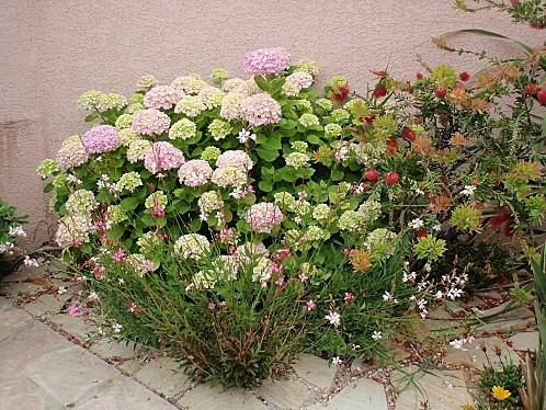 jardin 033