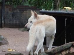 Janine en Australie