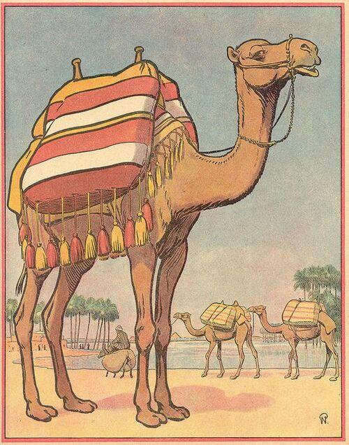 Thème : Chameau et dromadaire dans le désert (avec des cactus !)