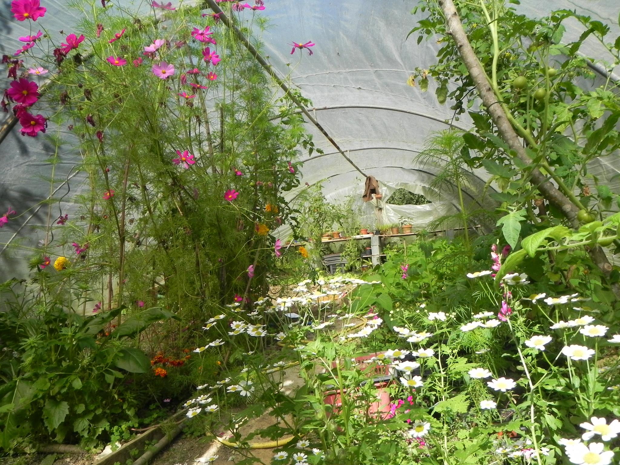 Association l gumes fleurs au nom de la rose - Association plantes aromatiques entre elles ...