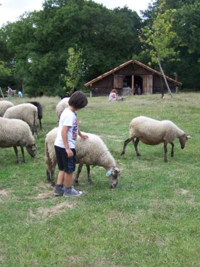 Blog de chipiron :Un chipiron dans les Landes, Les moutons dans l'airial