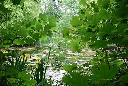 Bunratty - Irlande - Iris d'eau
